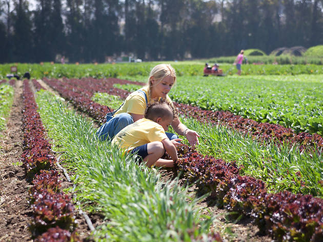 Family-friendly farms where you can pick your own fruit in L.A.