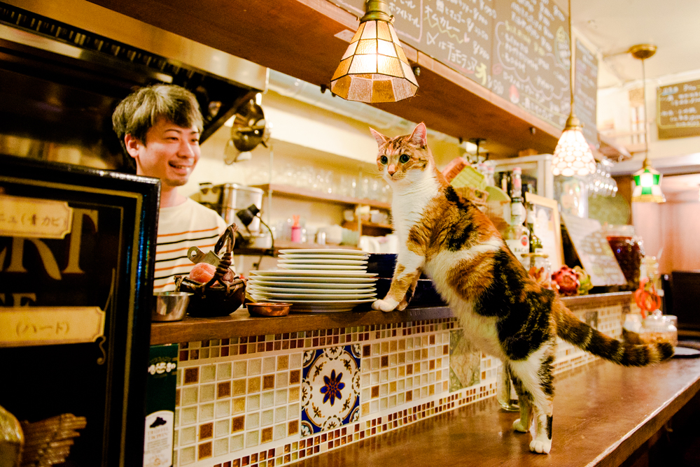 One night with Tokyo's sexiest cats
