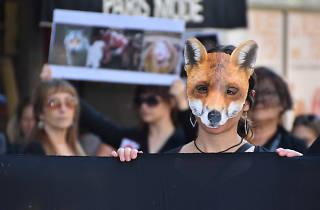 Animals Rights Parade