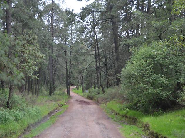 Title Bosque Tierra Canteada santuario de las luciérnagas