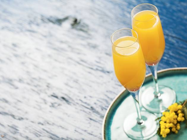 Mimosa Welcome to Thornbury