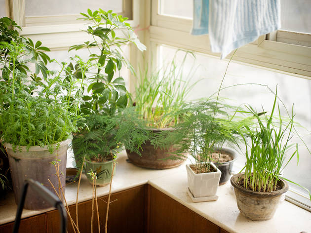 How to start an indoor garden in even the smallest New York apartment