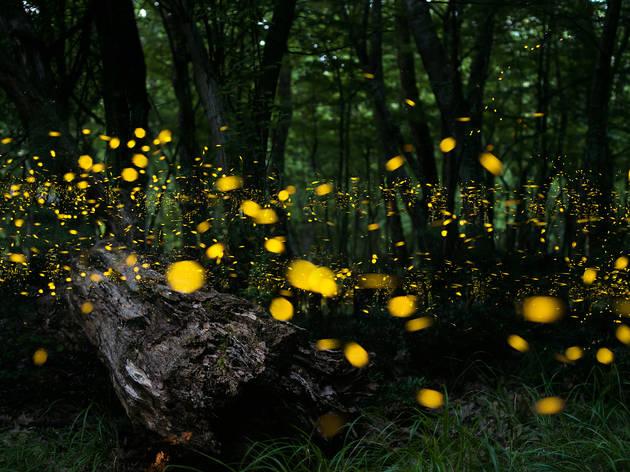 Santuario de las luciérnagas Piedra Canteada