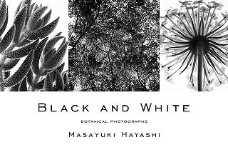 BLACK AND WHITE BOTANICAL PHOTOGRAPHS MASAYUKI HAYASHI EXHIBITION