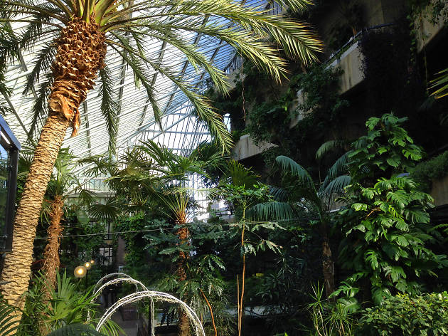 Marvel at the Barbican Conservatory