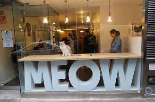 Meow Parlour Cat Café