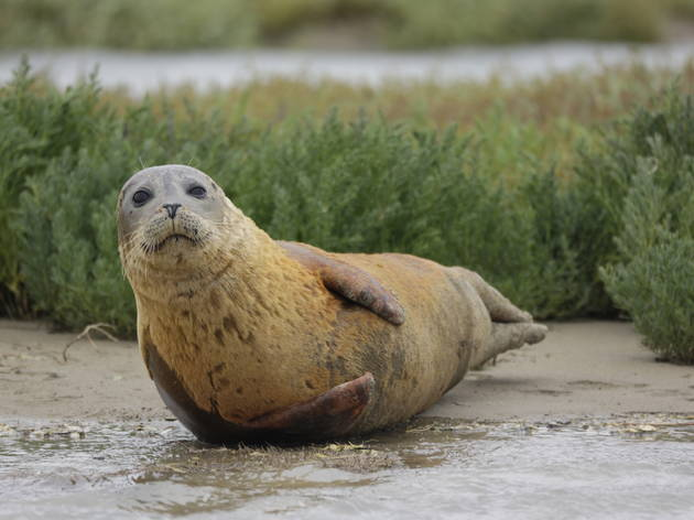 how the thames went from biologically dead to full of seals and