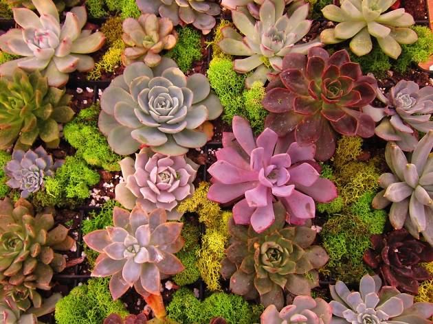 Inside Dig: Growing and Styling Succulents