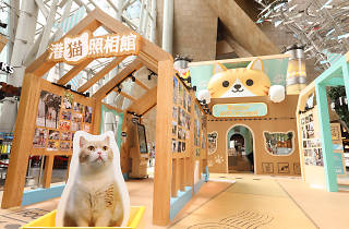 Langham Place #HappyMEOWment Photo Gallery