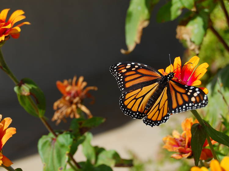The New Forest Wildlife Park's tropical butterfly house