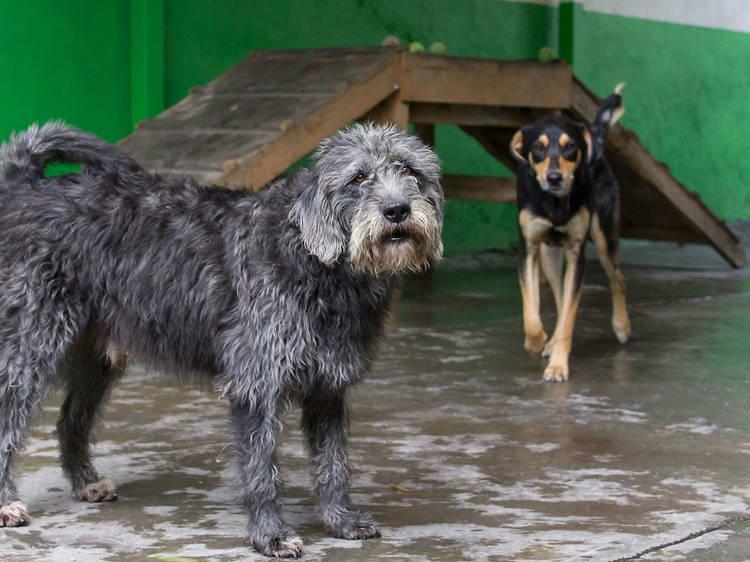DogPark Guardería & Hotel