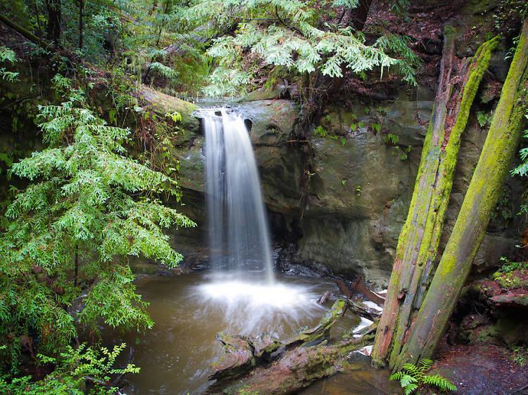 Sempervirens, Big Basin Redwoods State Park
