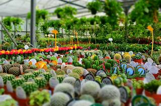 Generic plant nursery