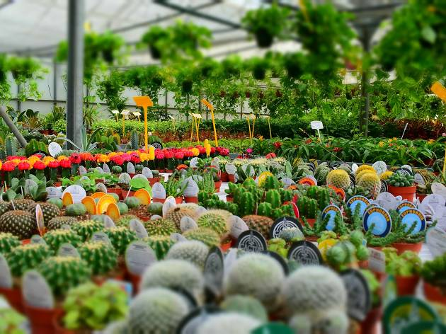 The best plant nurseries in Melbourne
