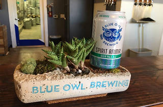 Blue Owl Brewing