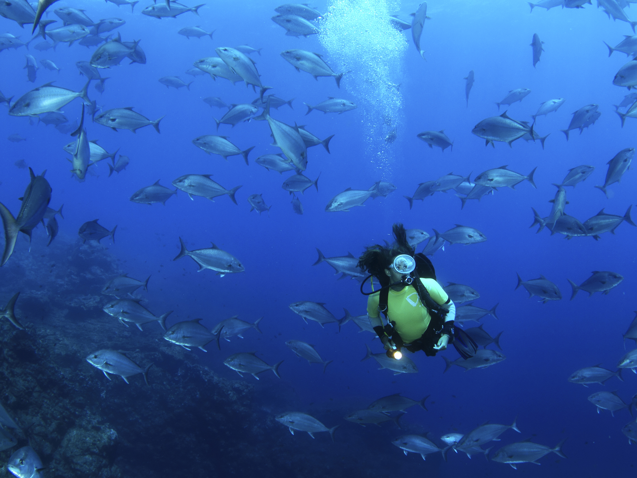Nade ao lado de animais gigantes