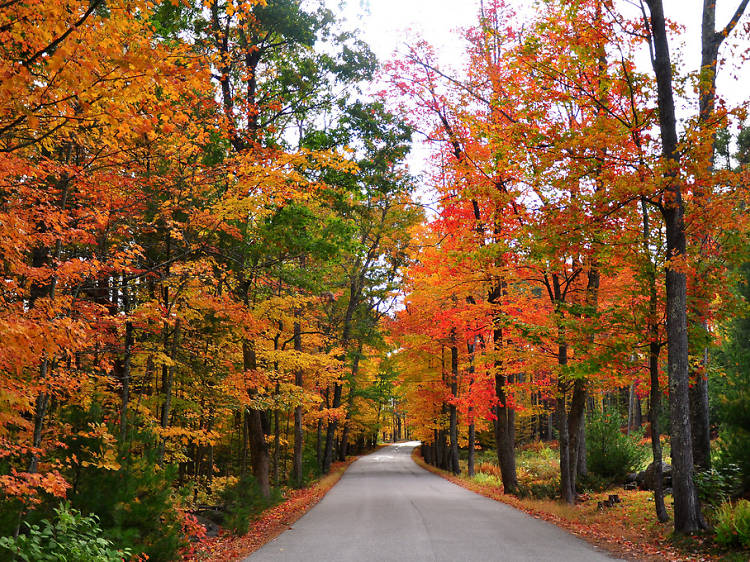Best scenic drives for fall near NYC