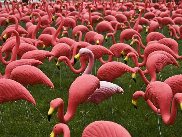 pink lawn flamingo