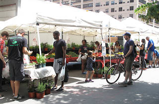 Morningside Park's Down to Earth Farmers' Market