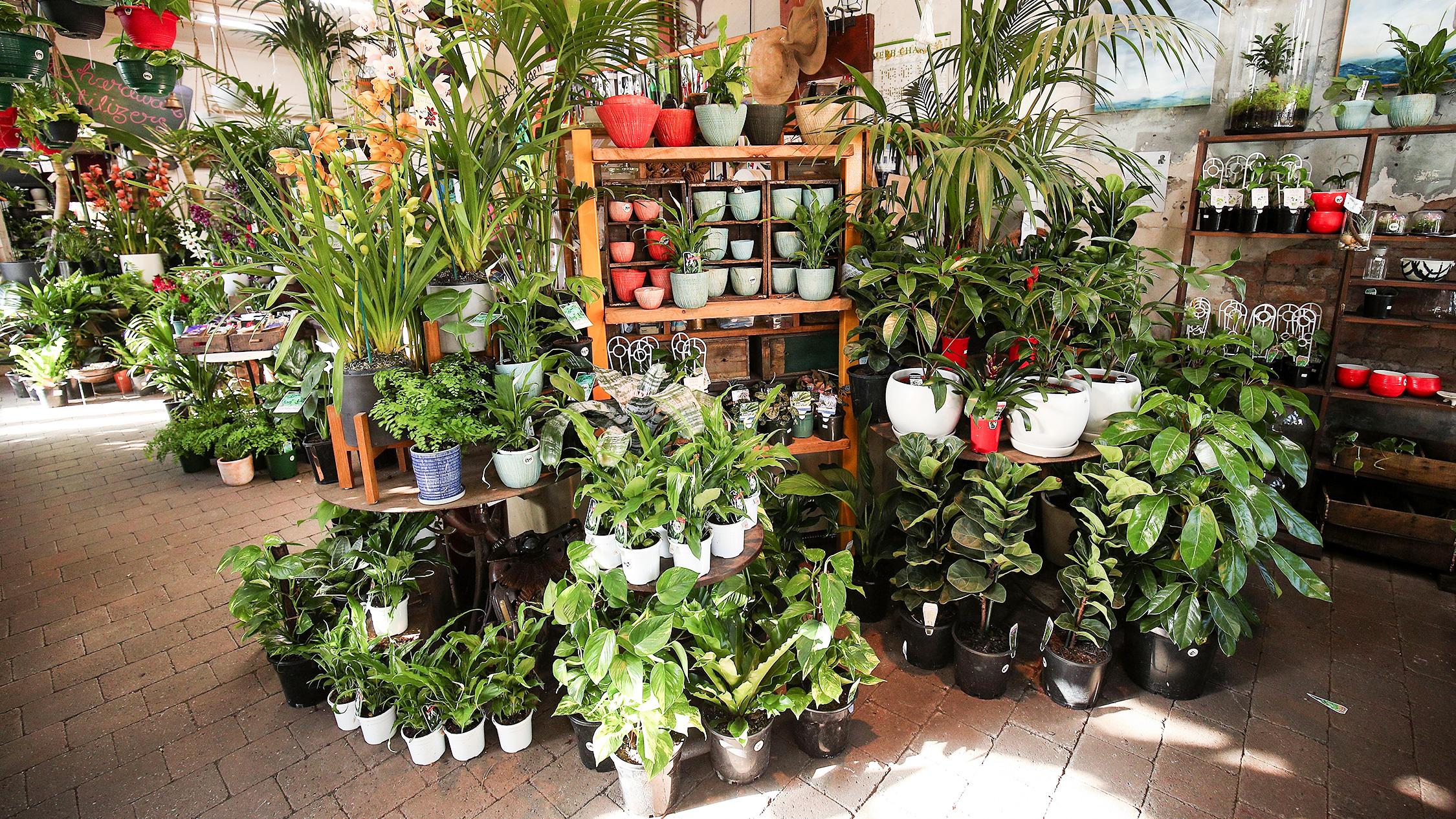 Plants 3 at Fitzroy Nursery