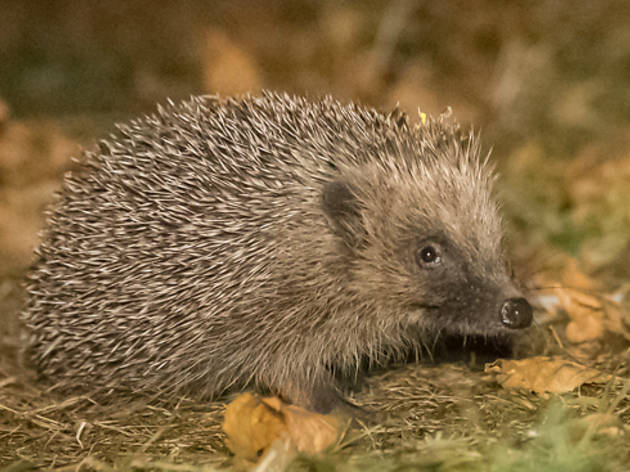 London Zoo has launched a new Wildlife Garden (it has a hedgehog highway!)