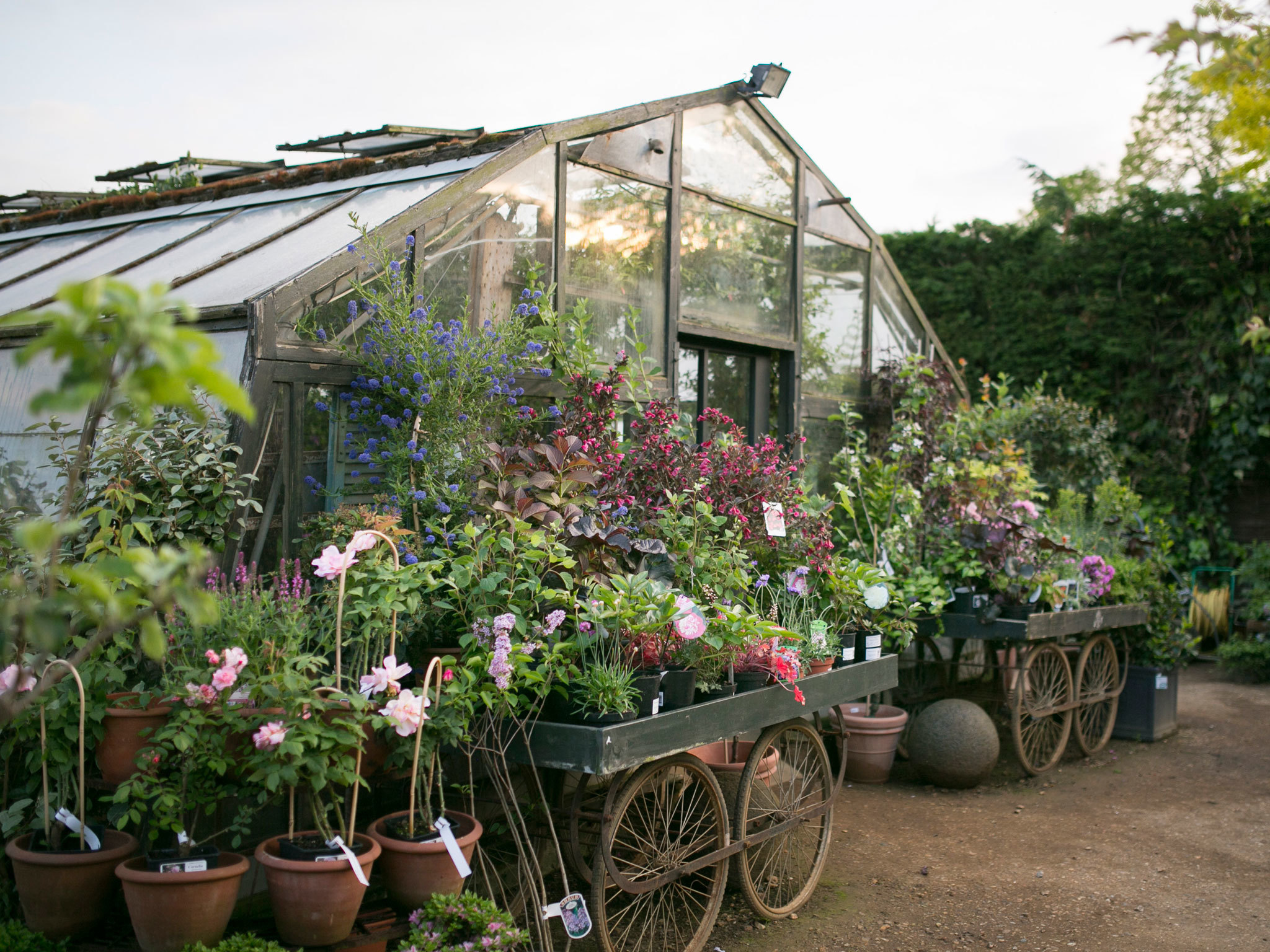 Shop: Petersham Nurseries