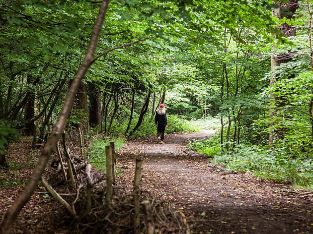 Queen's Wood