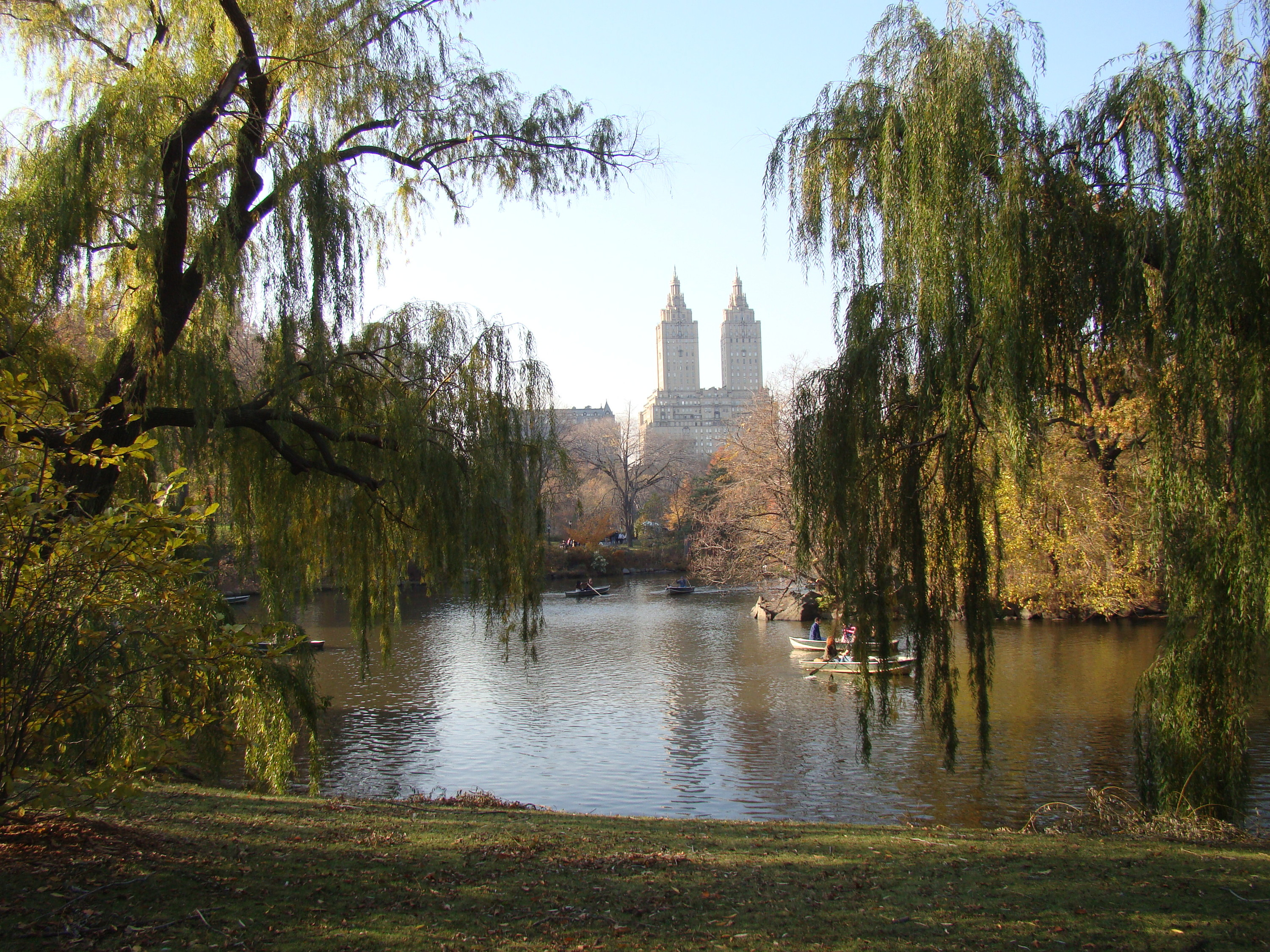 Hunt for wild black cherries in Central Park this weekend