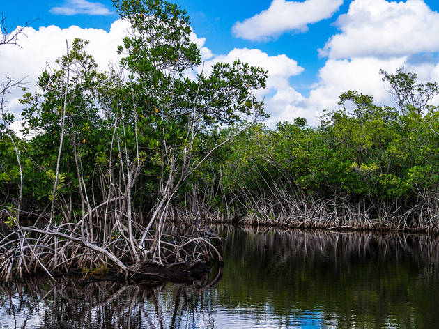 Everglades Airboat Tour