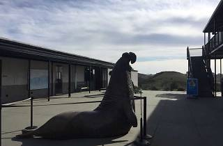 Marine Mammal Center