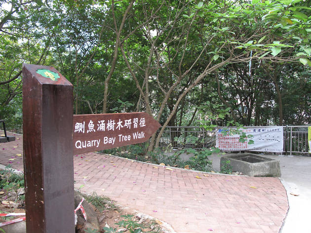 Quarry Bay Tree Walk