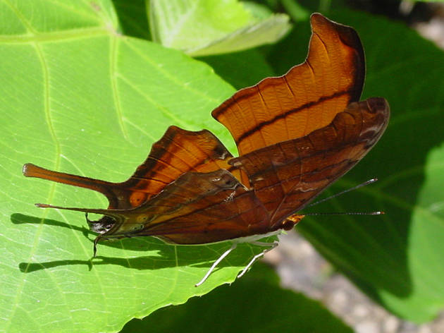 Deering Estate butterfly walk