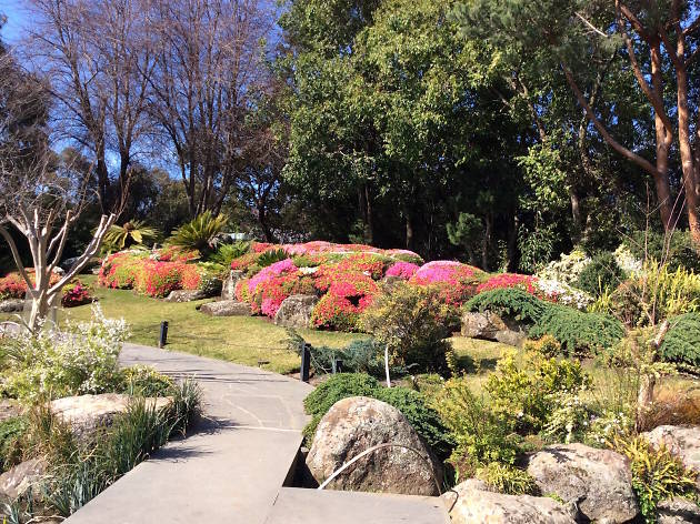 Japanese Garden at Melbourne Zoo