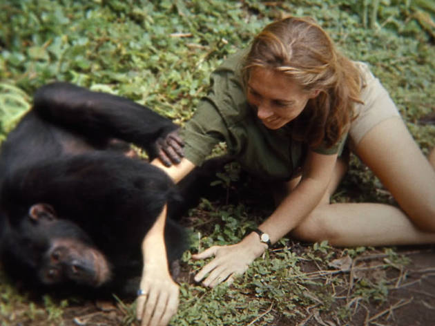 National Geographic presents Jane Goodall documentary at Hollywood Bowl with live orchestra