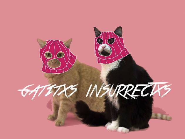 Gatitxs insurrectxs