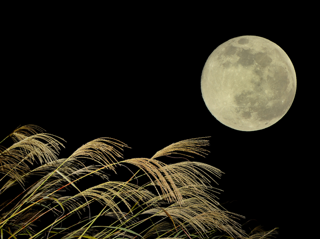 Autumn moon-viewing | Time Out Tokyo
