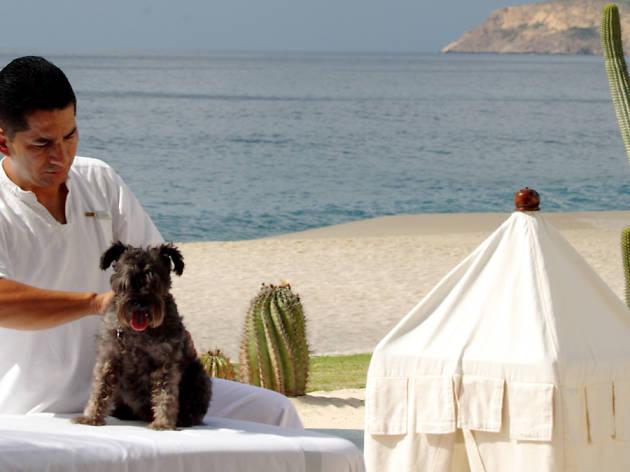 Dog-friendly hotels: Las Ventanas al Paraiso