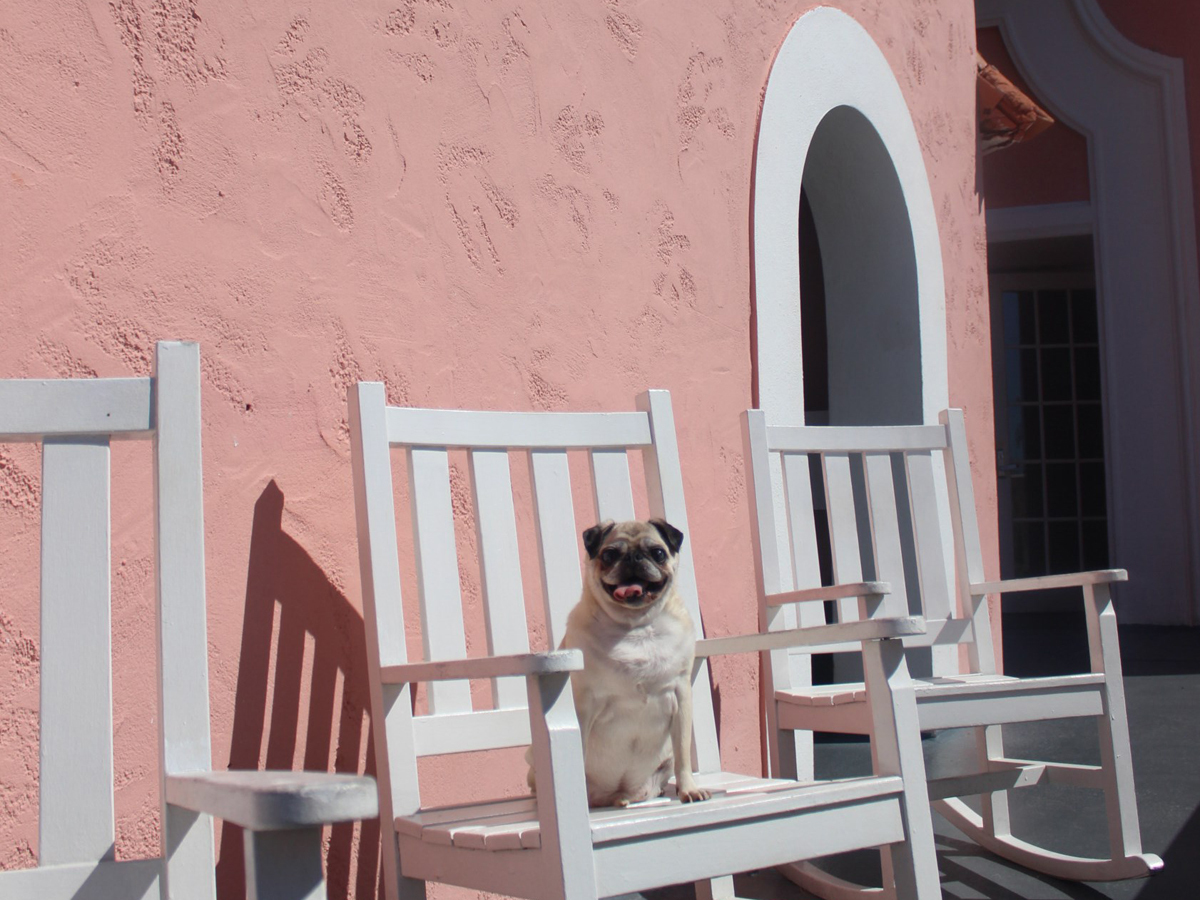 Dog-friendly hotels: The Don Cesar