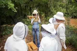 Urban Honey Bee Hive Tour