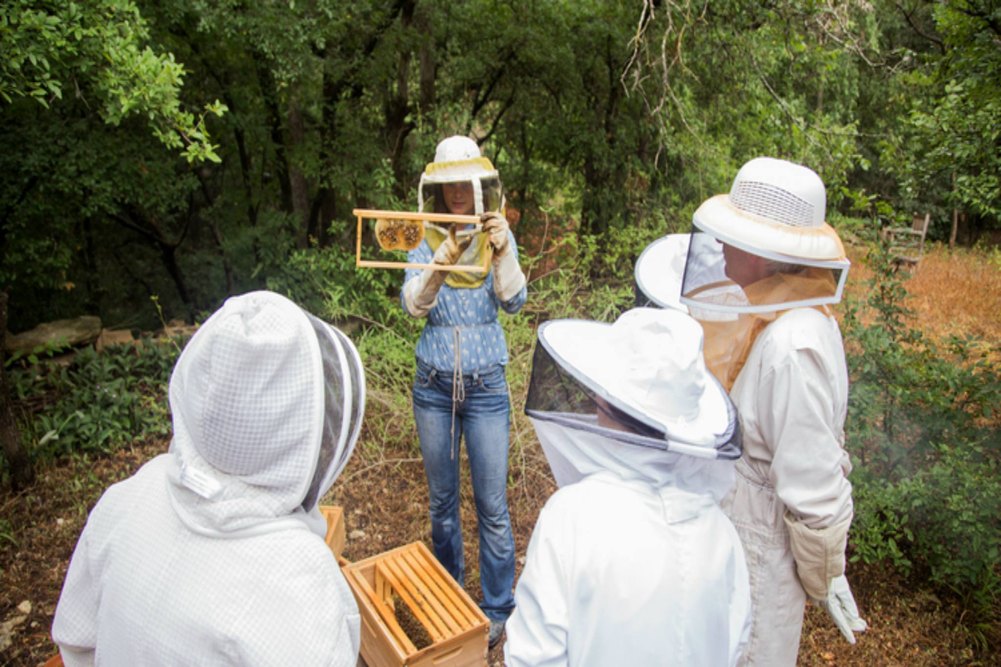 Urban Honey Bee Hive Tour
