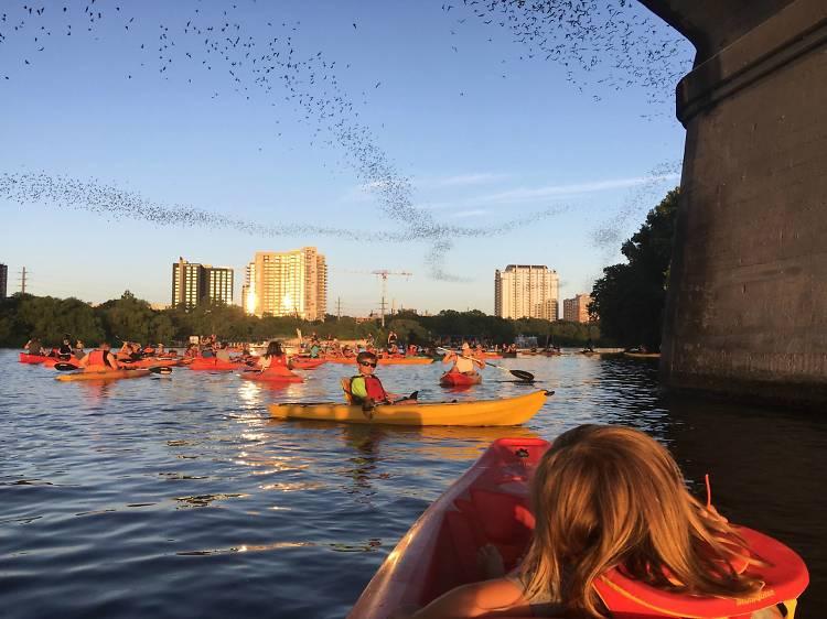 Live Love Paddle Congress Avenue Bridge Bat Tour