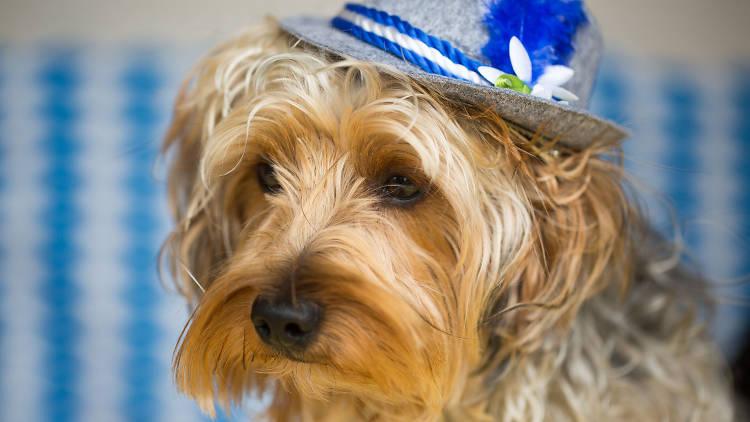 Dogs of Oktoberfest Munich Brauhaus