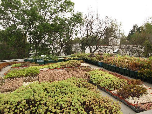 Azoteas verdes de la UNAM