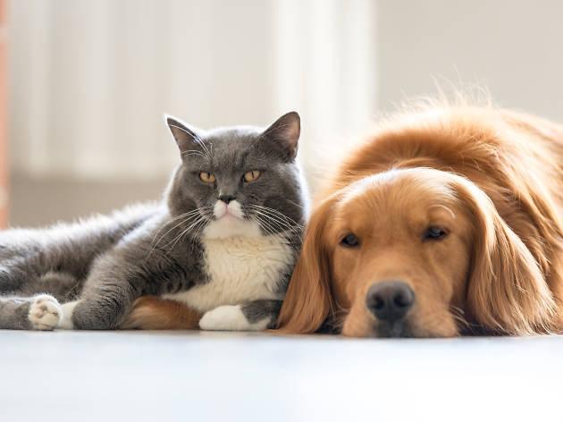Tu mascota también requiere su propio espacio
