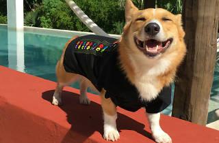 Pet Pals Boutique línea de ropa de mascotas