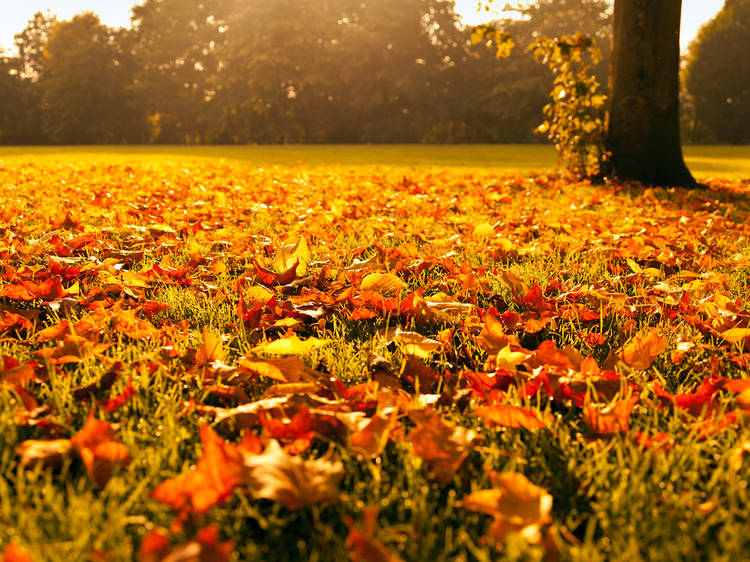 """10 versões de """"Autumn Leaves"""""""