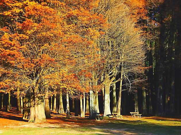 Três sítios para ver as folhas a cair em Lisboa