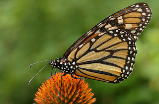 Taller infantil: La mariposa monarca