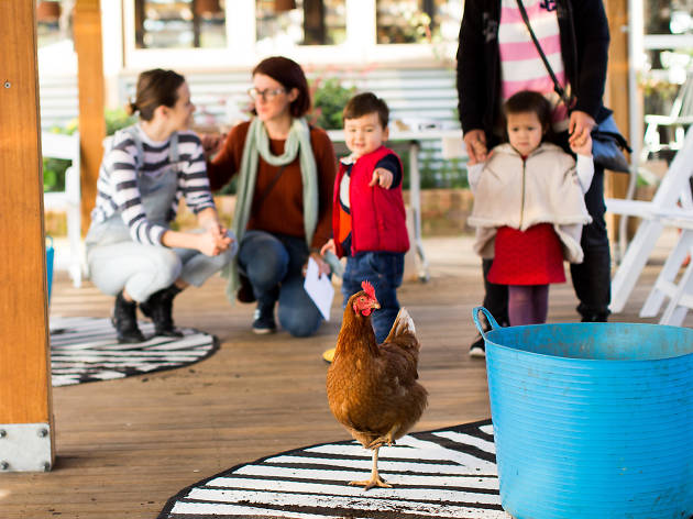 Boy points at chicken at Camperdown Commons