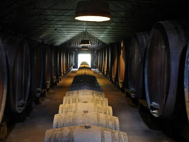 Lisbon private tours: Wine tasting tour of the Setúbal region